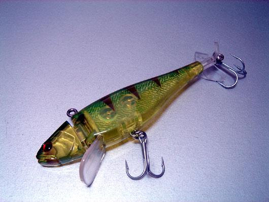 Trigger-Fish-003.jpg